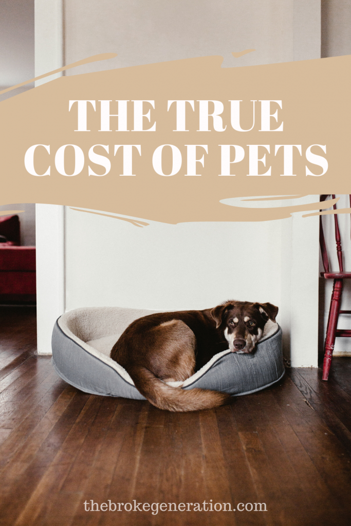 The true cost of pets